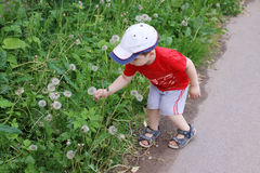 Cute little boy in cap and red t-shirt picks dandelions Royalty Free Stock Photography