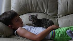 Cute little boy with cat on sofa stock video