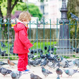 Cute little  boy catching and playing with pigeons in city Stock Image