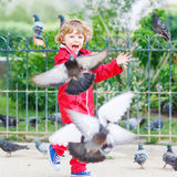 Cute little  boy catching and playing with pigeons in city Stock Photos