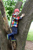 Cute little boy climbing trees Stock Image
