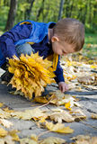 Cute little boy collecting autumn leaves Stock Photography