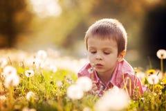 Cute little boy in a dandelion field, having fun Royalty Free Stock Photo