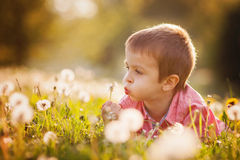 Cute little boy in a dandelion field, having fun Royalty Free Stock Photography