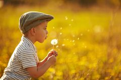 Cute little boy with dandelions Royalty Free Stock Image