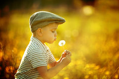 Cute little boy with dandelions Royalty Free Stock Photos