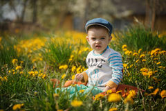 Cute little boy with dandelions Stock Images