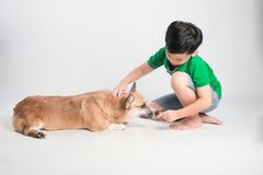Cute little boy with dog on white background stock photography