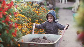 Cute little boy driving the wheelbarrow in the the garden through the flower. Male try to move cart, working outdoor. 4K Stock Image