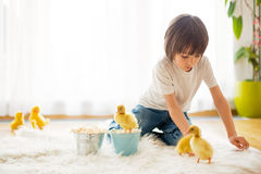 Cute little boy with duckling springtime, playing together Royalty Free Stock Photo