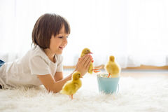 Cute little boy with duckling springtime, playing together Royalty Free Stock Image