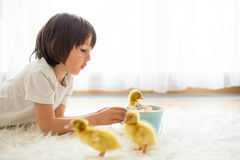 Cute little boy with duckling springtime, playing together Royalty Free Stock Photography