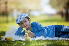 Cute little boy with ducklings springtime, playing together Stock Images