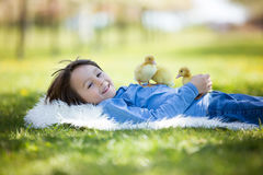 Cute little boy with ducklings springtime, playing together Stock Photo