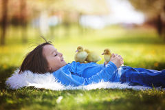 Cute little boy with ducklings springtime, playing together Royalty Free Stock Photography