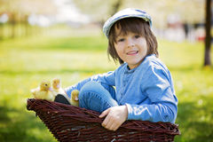 Cute little boy with ducklings springtime, playing together Stock Photography