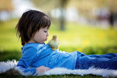 Cute little boy with ducklings springtime, playing together Royalty Free Stock Images