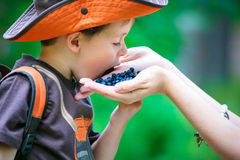 Cute little boy eating berries from mother's hand Stock Images