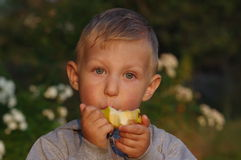 Little boy eating pear 2 Royalty Free Stock Photo