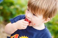 Boy eating a strawberry Stock Photos