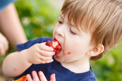 Boy eating a strawberry Royalty Free Stock Photos