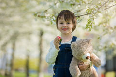 Cute little boy, eating strawberry in the park on a spring sunny. Afternoon, together with his big teddy bear Royalty Free Stock Image