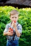 Cute little boy eating a strawberry in summer garden. Stock Photography
