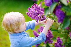Cute little boy enjoy blooming lilac in the domestic garden Stock Photo