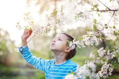 Cute little boy enjoy blooming tree with white flowers in spring warm day. Cute little boy enjoy blooming tree with white flowers in spring sunny day royalty free stock images