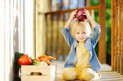 Cute little boy enjoy organic harvest in domestic garden Stock Images