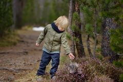 Cute little boy examines a Heather Bush in the Swiss National Park in the spring. Active family time outdoors. Hiking with young children. Study of nature stock photos