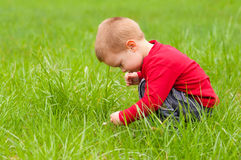 Cute little boy exploring the nature Royalty Free Stock Images