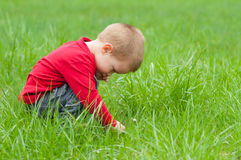 Cute little boy exploring the nature Royalty Free Stock Photo