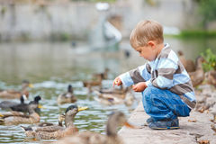 Cute Little Boy Feeding Ducks Royalty Free Stock Image