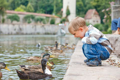 Cute little boy feeding ducks Stock Photos