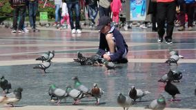 Cute Little Boy Feeding Pigeons stock footage