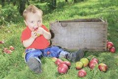 Cute little boy in the garden apple Stock Photo