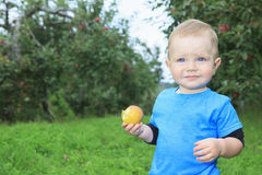 Cute little boy in the garden and picking apple Royalty Free Stock Photos