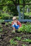 Cute little boy gardening Stock Image