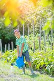 Cute little boy gardening with a watering can in domestic garden. stock images
