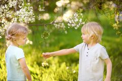 Cute little boy gives a cute little girl a flower in cherry or apple orchard during flowering. Easter. stock photo
