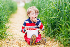 Cute little boy in glasses picking and eating strawberries on be Stock Images