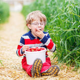 Cute little boy in glasses picking and eating strawberries on be Stock Image