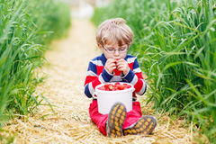 Cute little boy in glasses picking and eating strawberries on be Royalty Free Stock Photography
