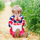 Cute little boy in glasses picking and eating strawberries on be Stock Photography