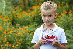 Cute little boy holding bowl with strawberries.  Royalty Free Stock Photos