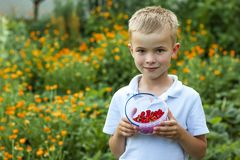 Cute little boy holding bowl with strawberries.  Royalty Free Stock Photography
