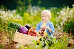 Cute little boy holding fresh organic beet in domestic garden Stock Photos