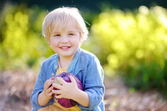 Cute little boy holding fresh organic red cabbage in domestic garden Stock Photo