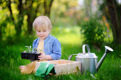 Cute little boy holding seedling in plastic pots on the domestic garden at summer day Stock Image